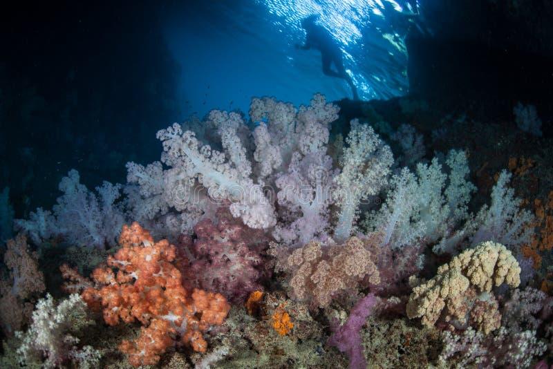 Μαλακή αψίδα κοραλλιών στοκ εικόνες