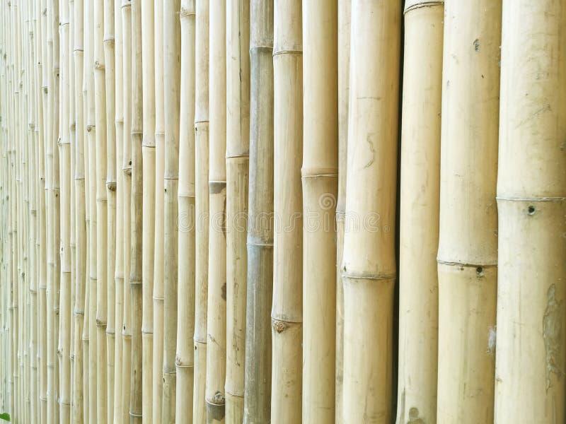 Μαλακός κίτρινος τοίχος μπαμπού κατά την άποψη προοπτικής στοκ φωτογραφία
