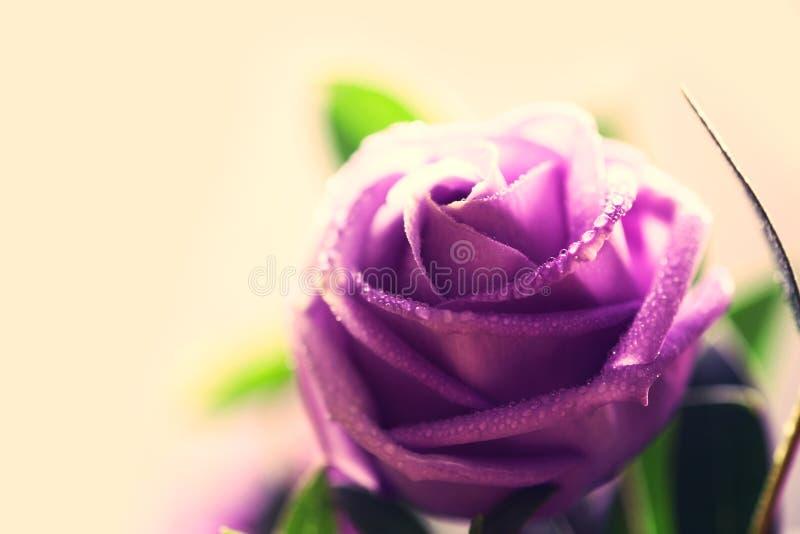 Download Μαλακό και γλυκό εκλεκτής ποιότητας λουλούδι Στοκ Εικόνες - εικόνα από γάμος, φύση: 62719936