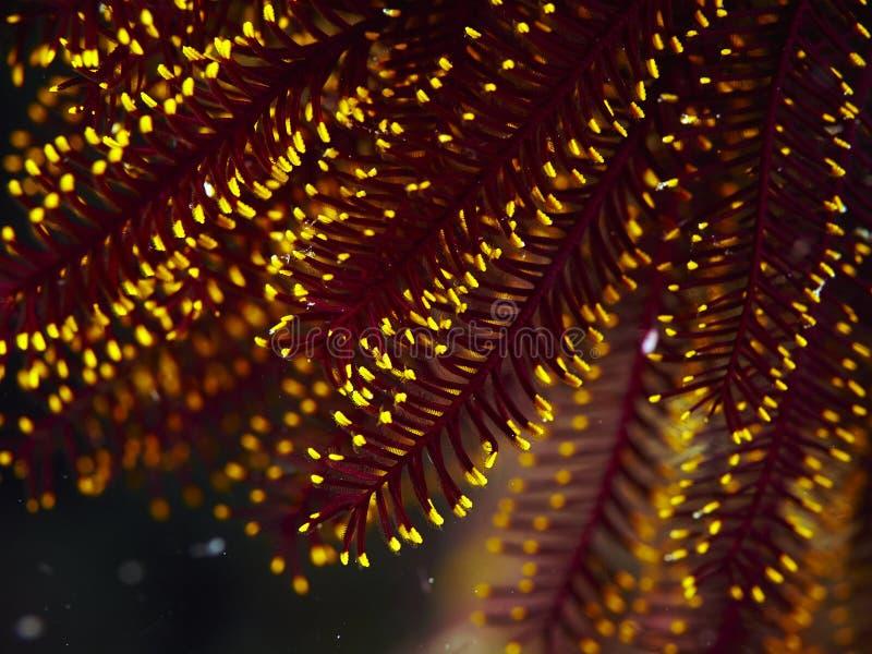 Μαλακό κοράλλι στοκ εικόνα με δικαίωμα ελεύθερης χρήσης