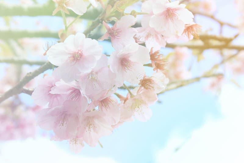 Μαλακό λουλούδι ύφους χρώματος και θαμπάδων στοκ εικόνες με δικαίωμα ελεύθερης χρήσης