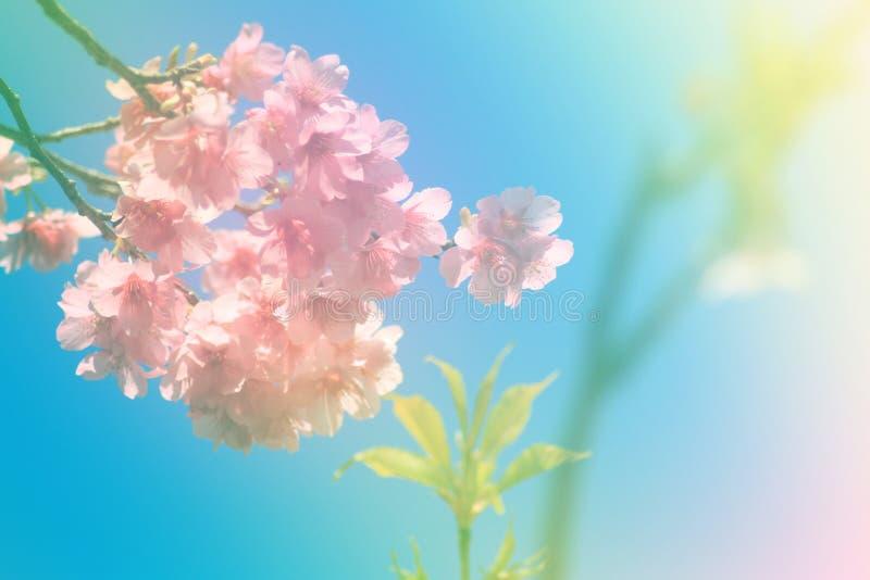 Μαλακό λουλούδι ύφους χρώματος και θαμπάδων στοκ φωτογραφία με δικαίωμα ελεύθερης χρήσης