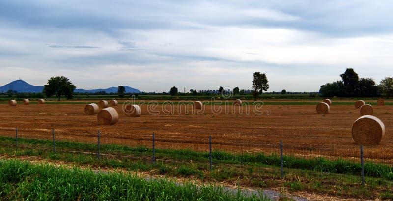 Μεγάλα στρογγυλά δέματα του αχύρου στο λιβάδι Este, Πάδοβα, Ιταλία στοκ εικόνα με δικαίωμα ελεύθερης χρήσης