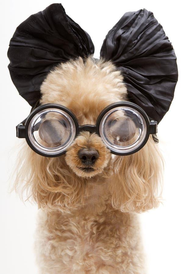 Μεγάλα τόξο και γυαλιά στοκ φωτογραφία