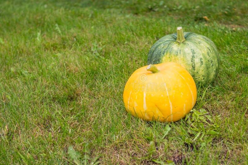 Μεγάλες πορτοκαλιές και πράσινες κολοκύθες στον ξύλινο φράκτη στον κήπο στο υπόβαθρο της πράσινης χλόης Χρόνος φθινοπώρου συγκομι στοκ φωτογραφία με δικαίωμα ελεύθερης χρήσης
