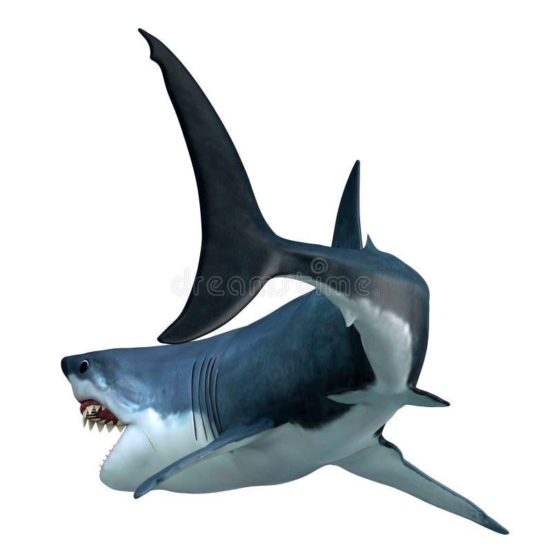 Μεγάλη άσπρη ουρά καρχαριών διανυσματική απεικόνιση