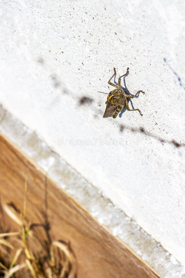 Μεγάλη ακρίδα σε τσιμεντένιο φράχτη στοκ εικόνες