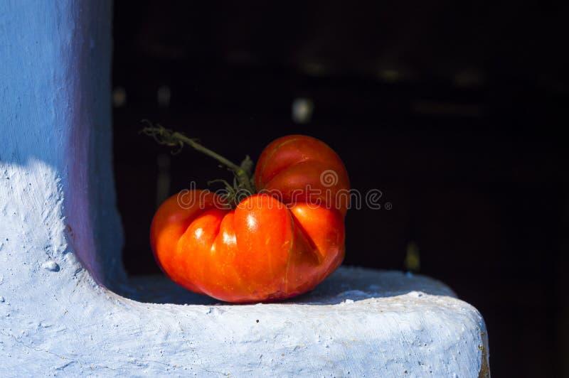 Μεγάλη κόκκινη ντομάτα που αυξάνεται στον κήπο της γιαγιάς στοκ φωτογραφία με δικαίωμα ελεύθερης χρήσης