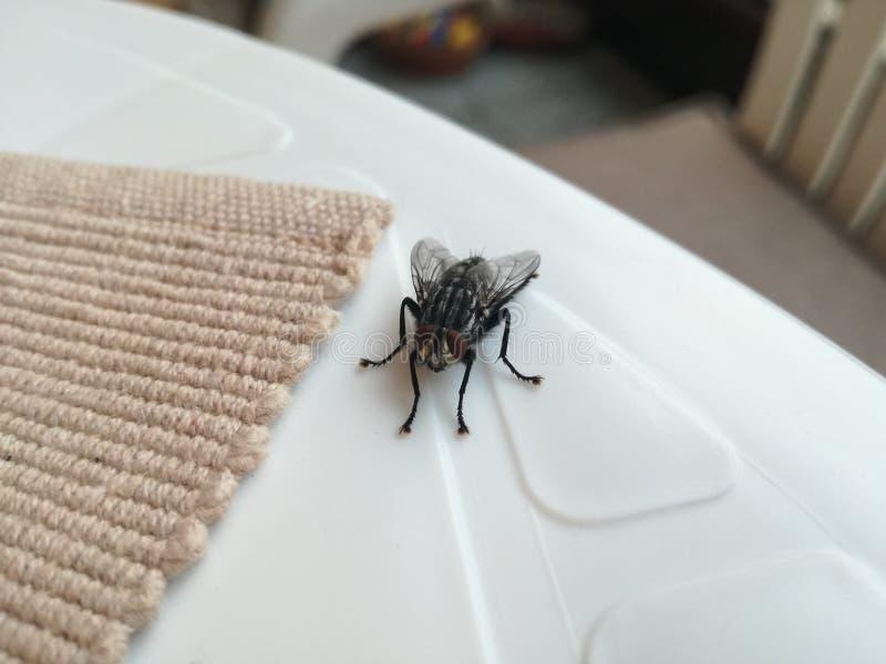Μεγάλη μαύρη μύγα στον πίνακα στοκ εικόνα