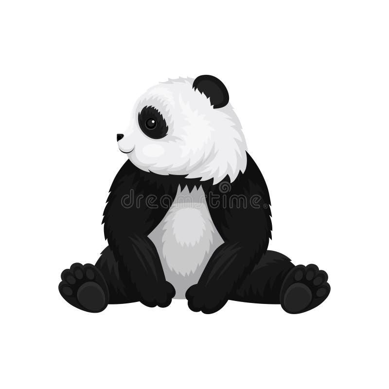 Μεγάλη νέα συνεδρίαση panda και κοίταγμα γύρω Το γραπτό μπαμπού αντέχει Χαριτωμένο εξωτικό ζώο Επίπεδο διανυσματικό σχέδιο διανυσματική απεικόνιση