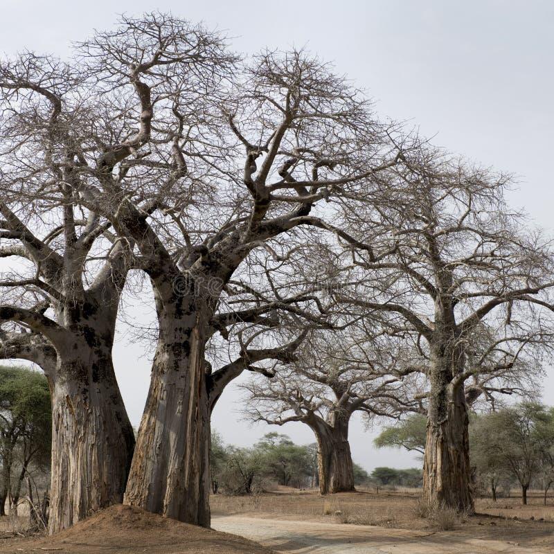 μεγάλη φυσική όψη δέντρων στοκ φωτογραφία