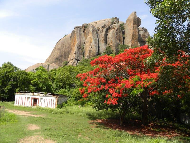 Μεγάλοι βράχοι γρανίτη στους λόφους με ένα σπίτι κατωτέρω και το δέντρο regia Delonix στοκ φωτογραφίες