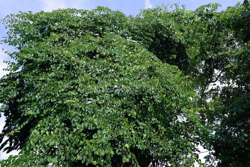 Μεγάλοι θάμνοι τα των οποίων φύλλα ήταν βεραμάν στοκ εικόνες