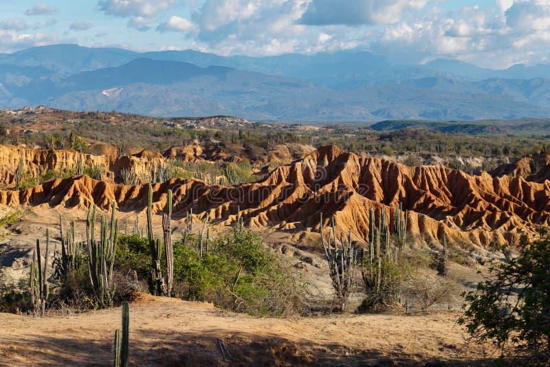 Μεγάλοι κάκτοι στην κόκκινη έρημο, έρημος tatacoa, Κολομβία, λατινικό amer στοκ εικόνα με δικαίωμα ελεύθερης χρήσης
