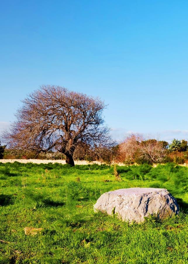 Μεγάλος βράχος και ένα παλαιό δρύινο δέντρο στοκ εικόνες