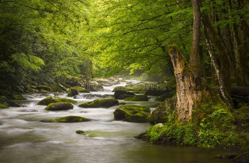μεγάλος ειρηνικός καπνώδης πάρκων βουνών εθνικός στοκ εικόνες με δικαίωμα ελεύθερης χρήσης