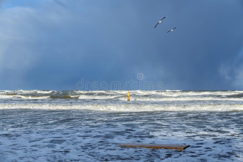 Μεγάλος κίτρινος σημαντήρας δύο κυμάτων γλάροι στη θάλασσα της Βαλτικής σε Stegna στοκ εικόνες με δικαίωμα ελεύθερης χρήσης