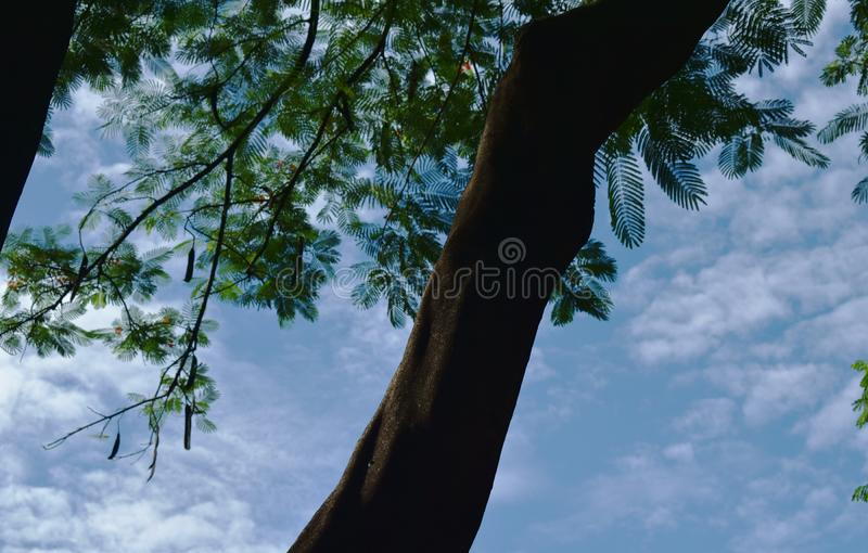 Μεγάλος κορμός δέντρων με το φωτεινό υπόβαθρο ουρανού τη θερινή ημέρα στοκ φωτογραφία