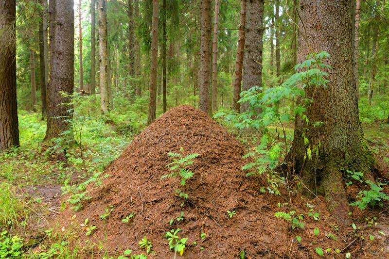 Μεγάλος λόφος μυρμηγκιών στοκ φωτογραφία