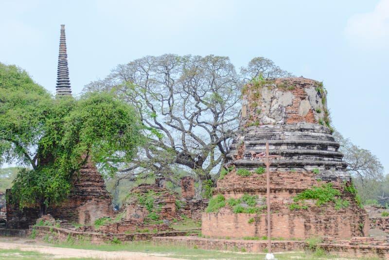 μεγάλος ναός δέντρων στοκ εικόνες