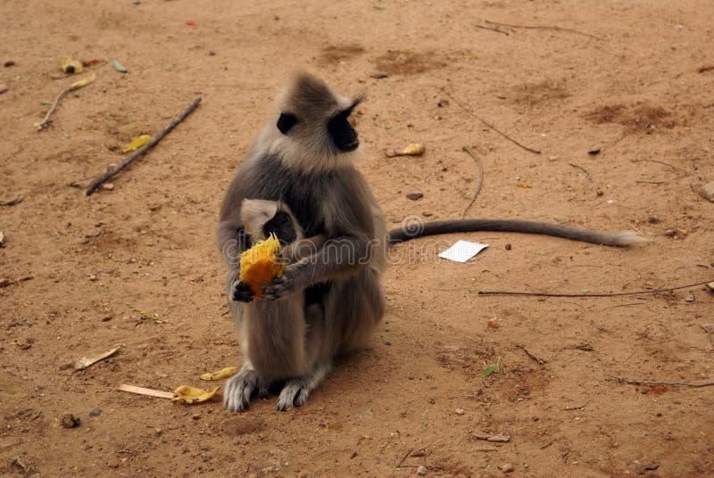 μεγάλος πίθηκος μωρών στοκ φωτογραφίες