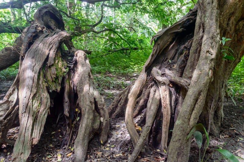 Μεγάλος παλαιός κορμός δέντρων στοκ φωτογραφία με δικαίωμα ελεύθερης χρήσης