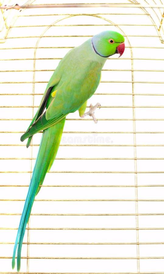 Μεγάλος πράσινος παπαγάλος στοκ εικόνες