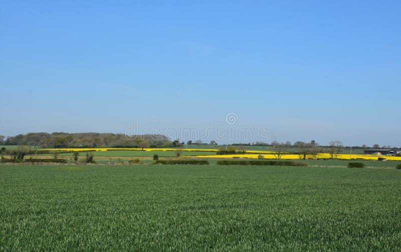 Μεγάλος πράσινος τομέας Cropland και του συναπόσπορου στοκ φωτογραφίες