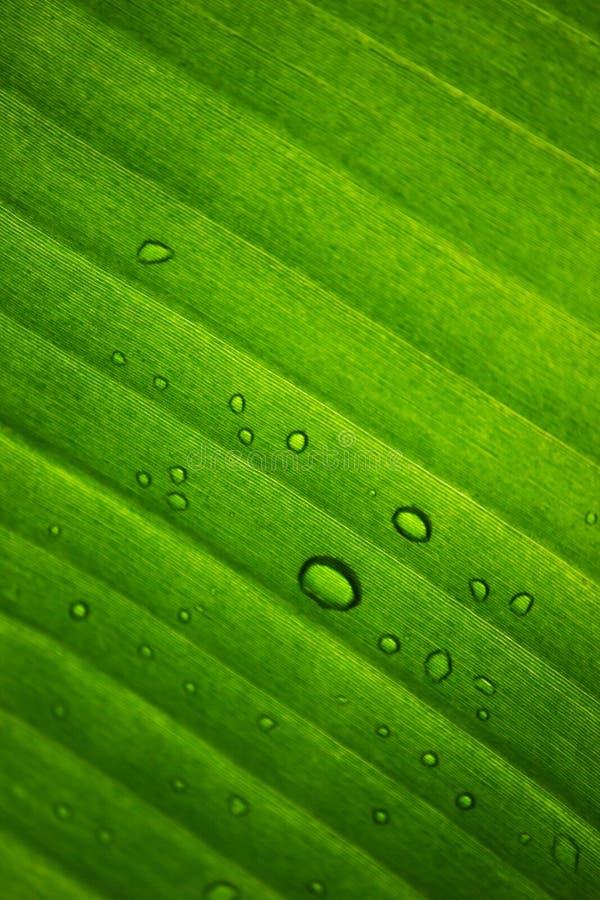 Μεγάλος υγρός διαφανής βγάζει φύλλα με τις πτώσεις της δροσιάς στοκ φωτογραφία με δικαίωμα ελεύθερης χρήσης