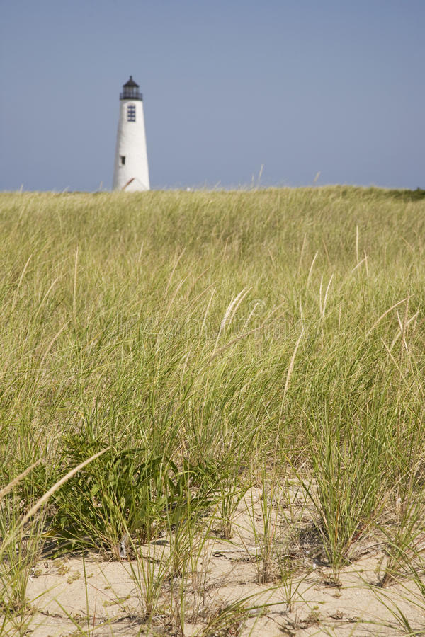 μεγάλο ελαφρύ seagrass σημείου n στοκ εικόνες