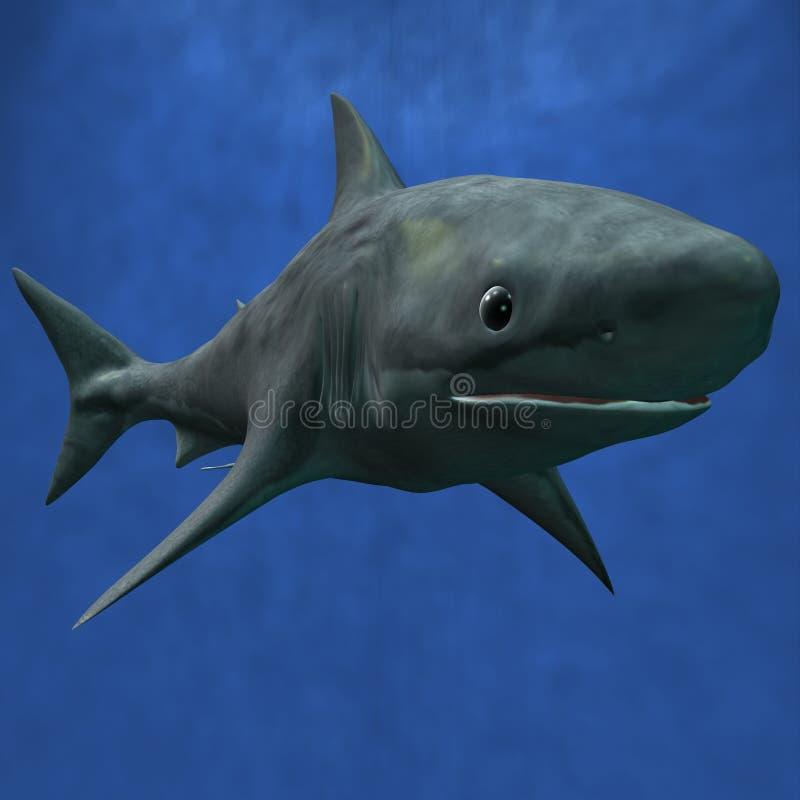 μεγάλο λευκό καρχαριών διανυσματική απεικόνιση