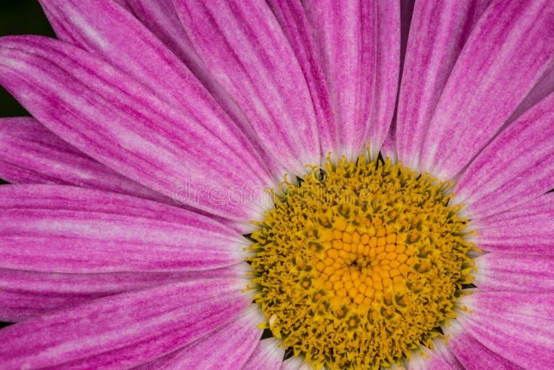 Μεγάλο λουλούδι, ένα τεμάχιο ενός λουλουδιού στοκ φωτογραφίες με δικαίωμα ελεύθερης χρήσης