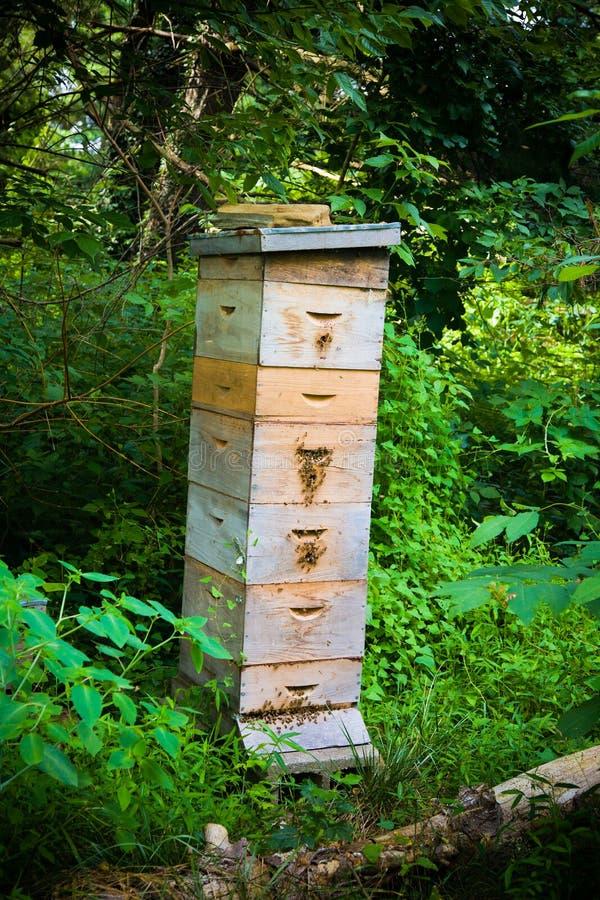 Μεγάλο μελισσουργείο μελισσών μελιού στοκ φωτογραφίες με δικαίωμα ελεύθερης χρήσης