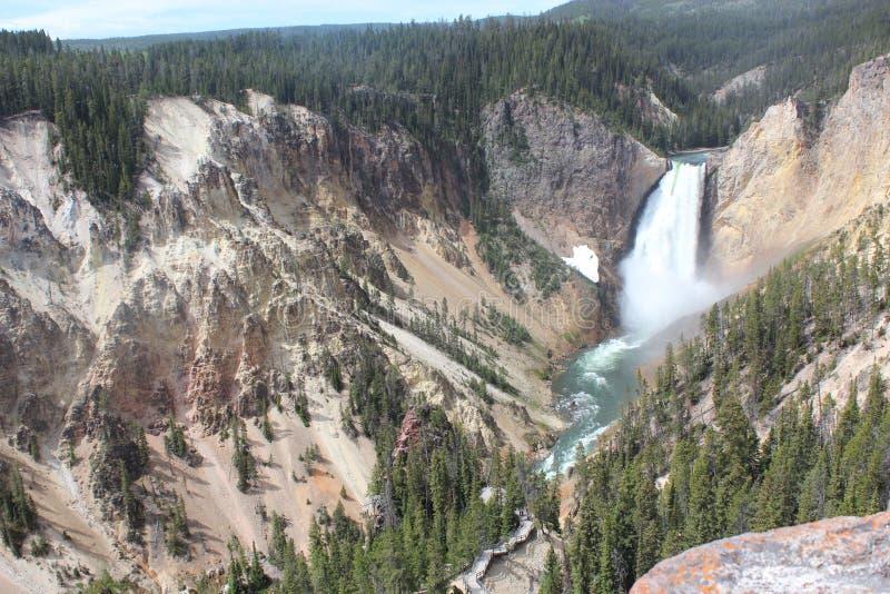 Μεγάλο παιδί καταρρακτών φαραγγιών Yellowstone στοκ εικόνες