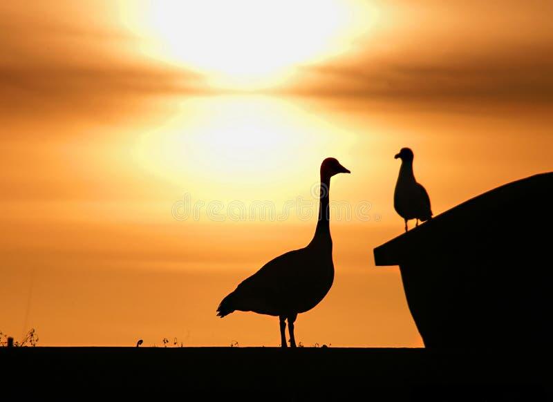 Download μεγάλο πουλί λίγα στοκ εικόνα. εικόνα από επικοινωνία, καναδικά - 51229