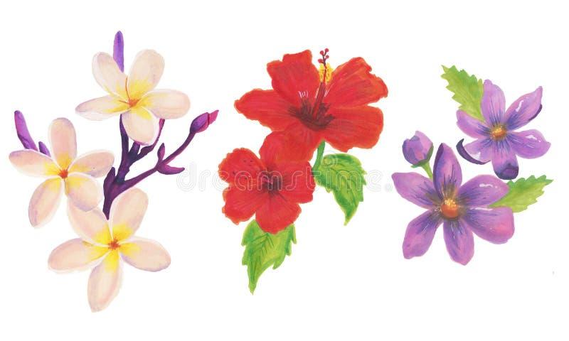 Μεγάλο συλλογή ή σύνολο ρεαλιστικών λουλουδιών για το σχέδιο στοκ εικόνες