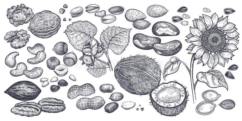 Μεγάλο σύνολο καρυδιών και σπόρων ελεύθερη απεικόνιση δικαιώματος