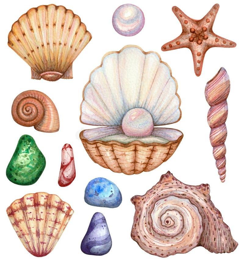 Μεγάλο σύνολο κοχυλιών watercolor σε ένα άσπρο υπόβαθρο διανυσματική απεικόνιση
