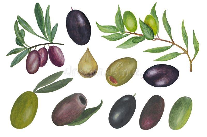 Μεγάλο σύνολο Watercolor που αποτελείται από τους διάφορους τύπους ελιών: ελεύθερη απεικόνιση δικαιώματος