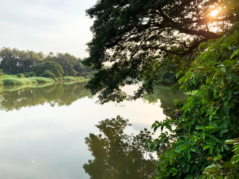 Μεγάλο υπόβαθρο ποταμών και δέντρων στοκ εικόνες με δικαίωμα ελεύθερης χρήσης