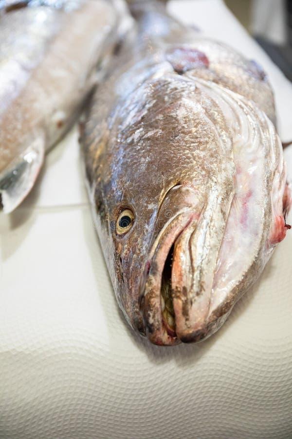 Μεγάλο φρέσκο corvina ακατέργαστων ψαριών στον πίνακα στοκ φωτογραφίες