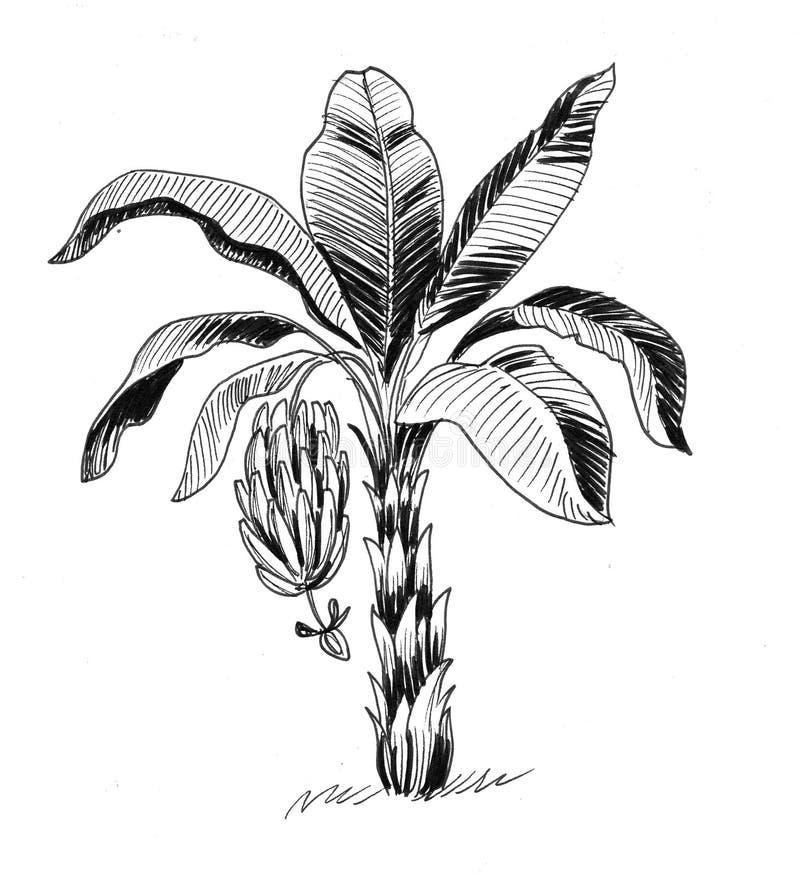 μεγάλο φωτεινό στενό πράσινο δέντρο φύλλων μπανανών επάνω διανυσματική απεικόνιση