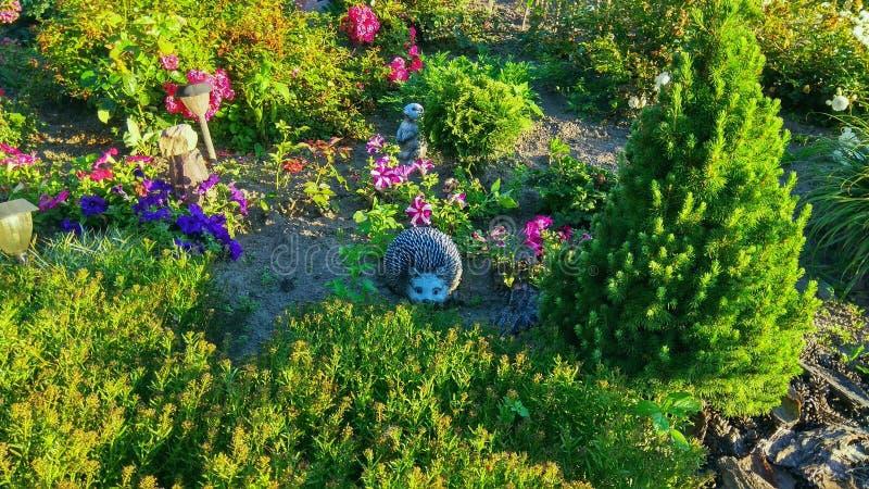 Μεγάλο Flowerbed με το σκαντζόχοιρο στοκ φωτογραφία με δικαίωμα ελεύθερης χρήσης