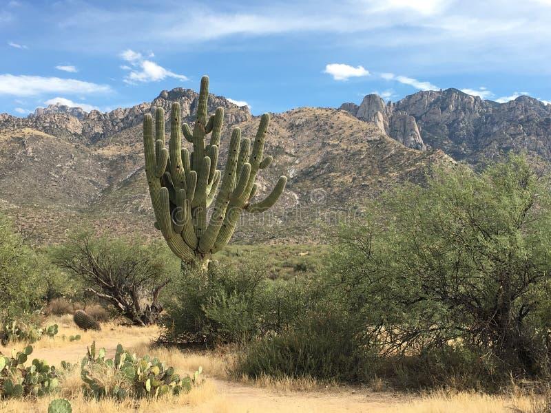 μεγάλο saguaro στοκ φωτογραφία