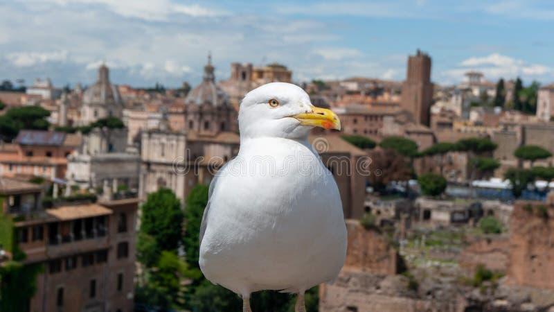 Μεγάλο seagull επάνω από την αρχαία πόλη στοκ εικόνα