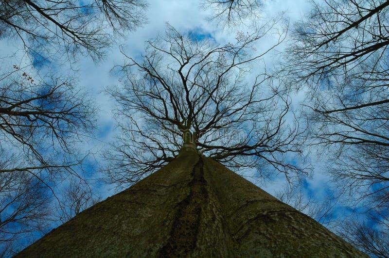 μεγάλο treetop δέντρων στοκ εικόνες