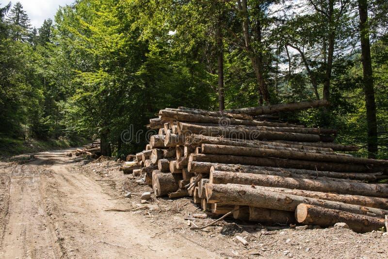 Μεγάλο Woodpile από τα πριονισμένα αποβιβασμένα κούτσουρα ξύλου πεύκων στοκ εικόνες