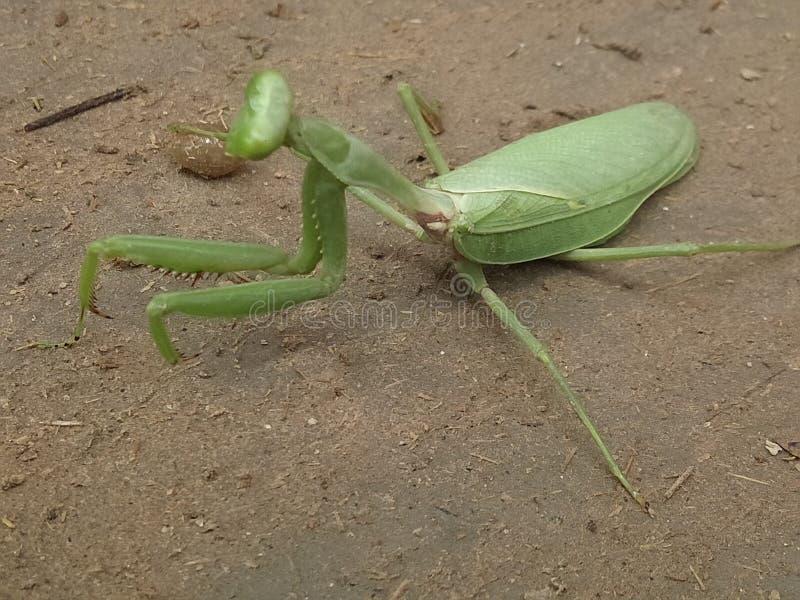 Μεγάλα έντομα στοκ φωτογραφία με δικαίωμα ελεύθερης χρήσης
