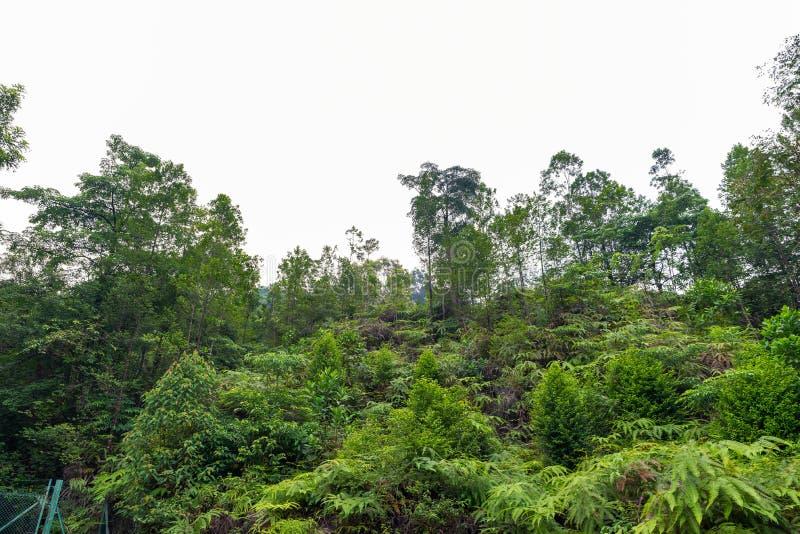 Μεγάλα δασικά δέντρα φύσης στοκ φωτογραφίες