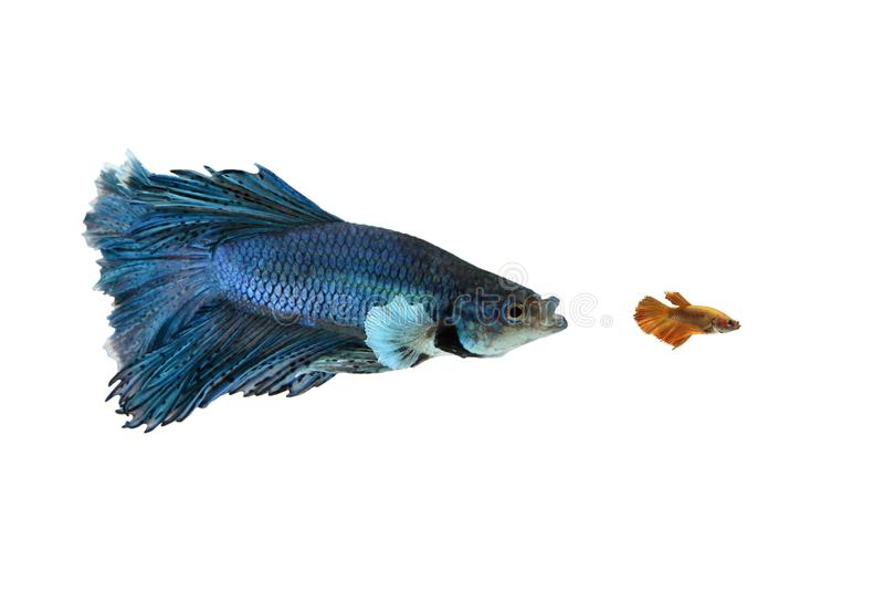Μεγάλα και μικρά ψάρια στοκ φωτογραφία